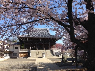 桜満開02